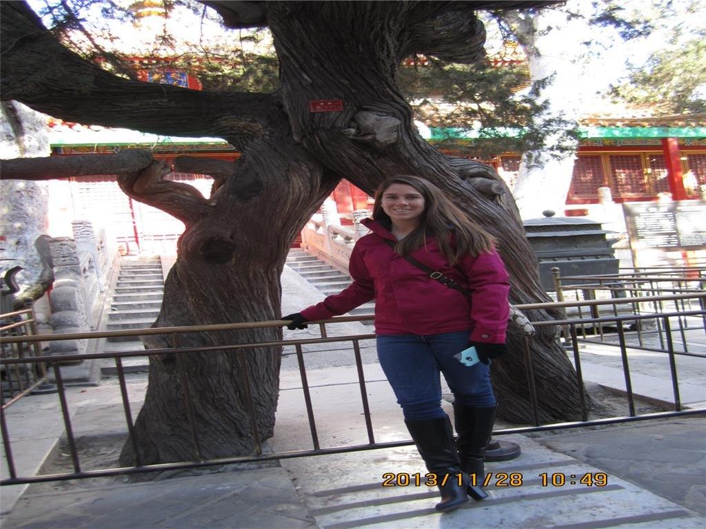 故宫夫妻树 1305